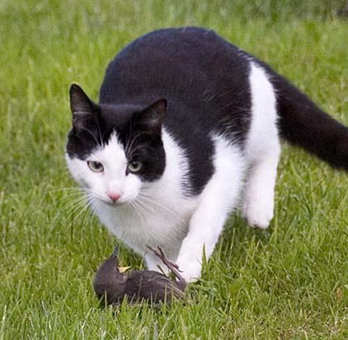 cat_bird3