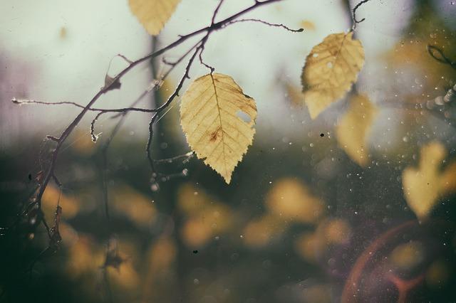 leaves-690474_640