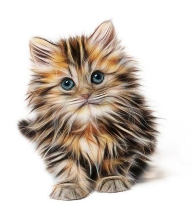 kitten-1582384_640